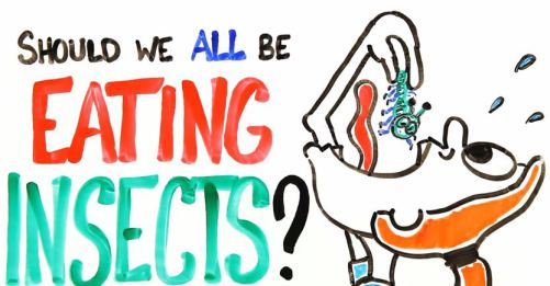Should_We_All_Be_Eating_Insects