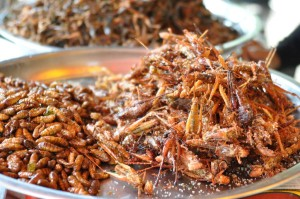 Entomophagy, eat insects, eat bugs, edible insects, edible bugs, cricket powder, cricket flour, insect powder, insect flour, mealworm powder, mealworm flour, sustainable, superfood, eat clean, future of food, bug flour, cricket protein, cricket protein powder,