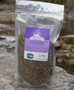 Moroccan Crickets- Large Bag