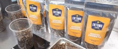 Roasted Crickets? Here's a Product Trend to Hop On
