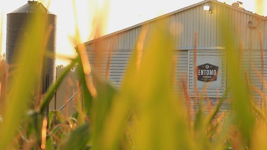 entomo farms barn and farm in norwood ontario
