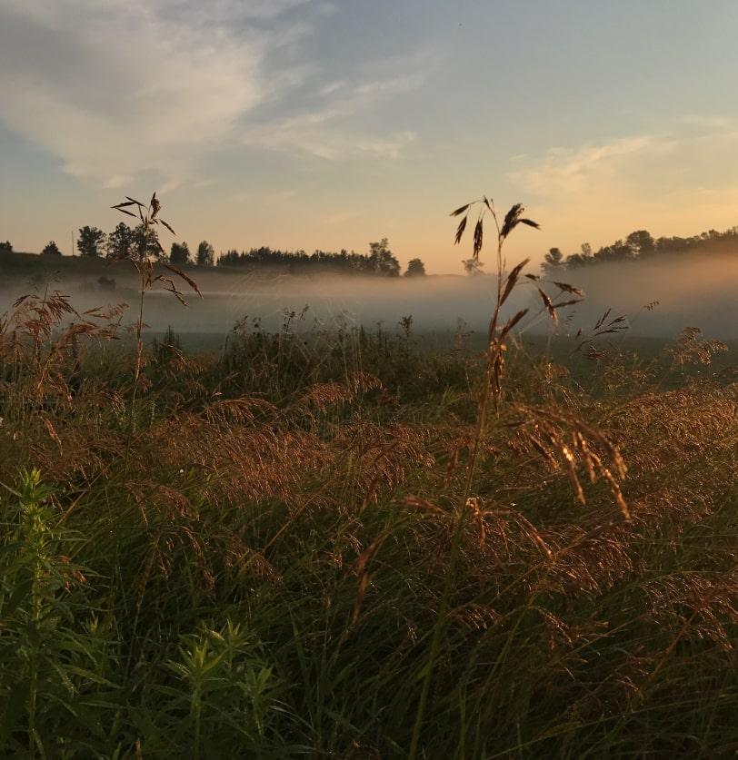 Photo of a farm field.