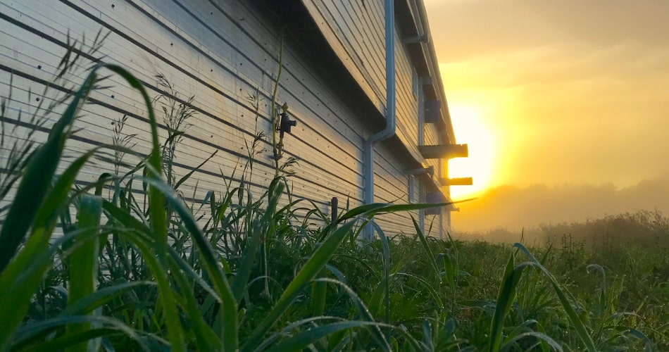 Photo of a farm field at sunrise.